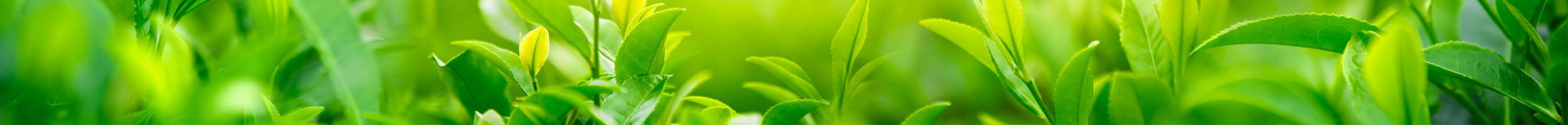 green_header
